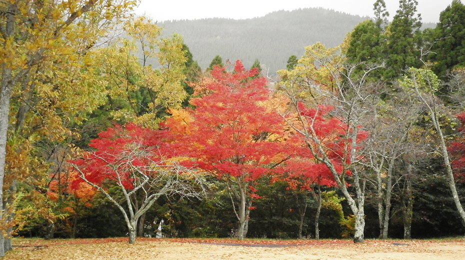 秋になると真っ赤な紅葉も見られます。