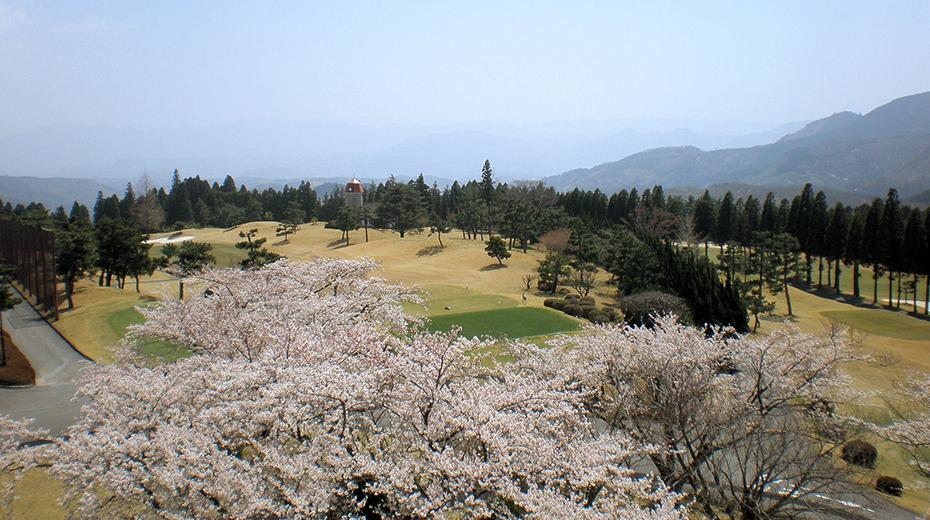 春:クラブハウス2階から見た桜。